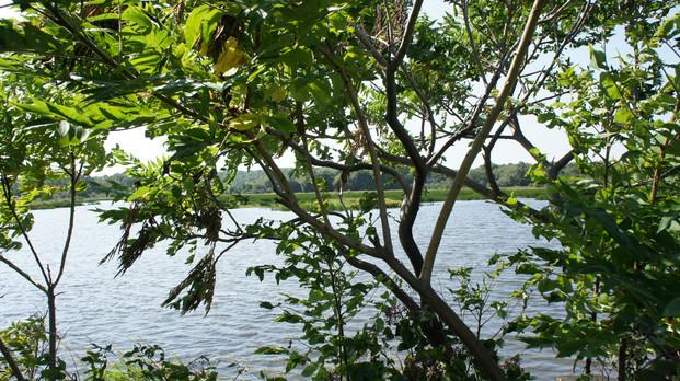 Parc national Jacques cartier