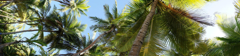 Into the palms