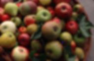 Marc_Lateur_panier_Diversité_fruits.JPG