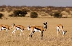 Kalahari 1.jpg