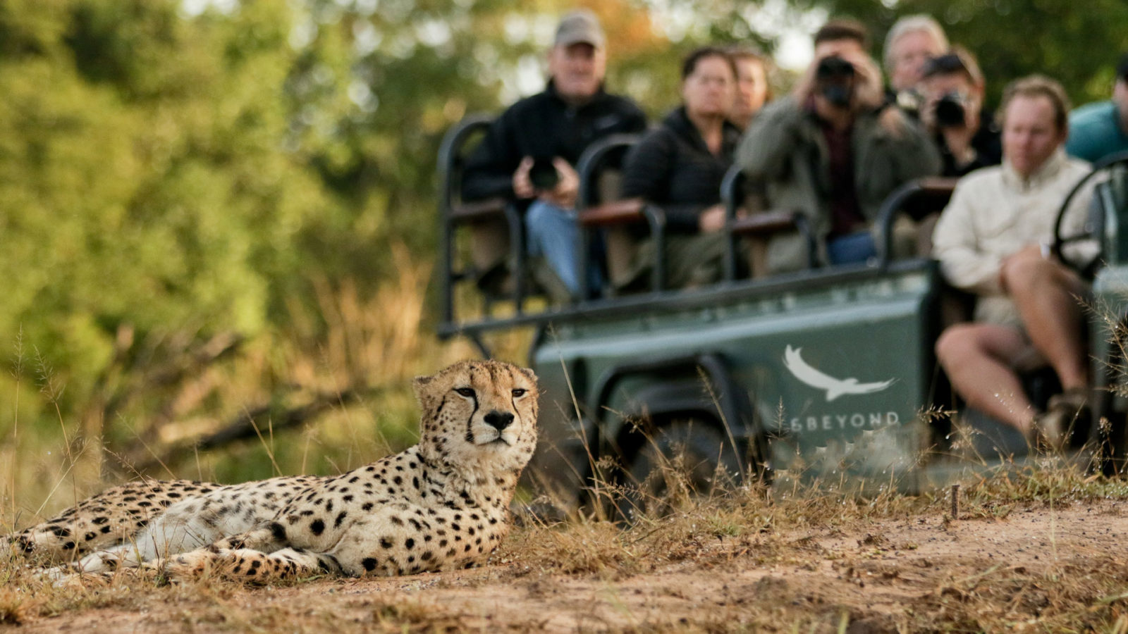 cheetah-phinda-south-africa-1600x900.jpg