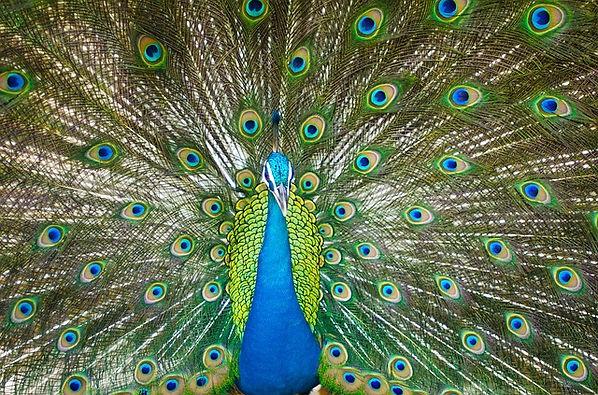 artedasandra.com by pixabay free