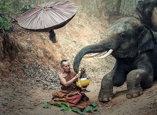 elephant-e83db30d2d_1920.jpg