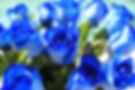 blue roses.jpg