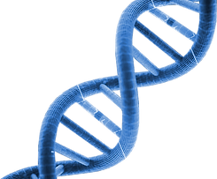 s4-dna.png