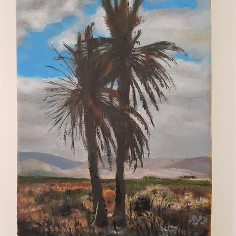 Burned palm tree