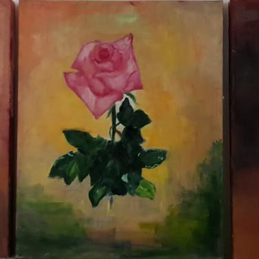 Rose in 3 colors