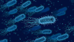 Sanidad propone una revisión de los protocolos de actuación en materia de seguridad alimentaria