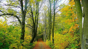 Sociedad forestal; incentivos al ecologismo