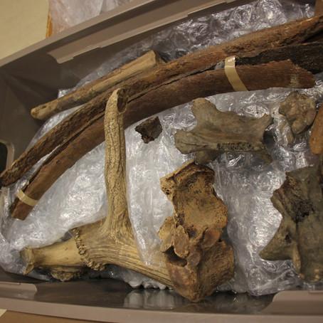 Berlare embraces its palaeontological heritage