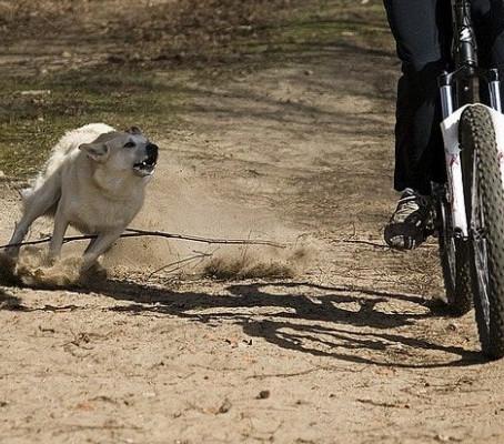 ¿Cómo debes actuar si un perro te ataca cuando vas en tu bicicleta? Parte 1