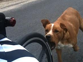 Parte 2: ¿cómo debes pelear con un perro en caso que ataque contra tu vida?