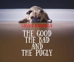 Loves Animals Pugs