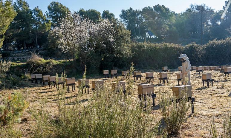 Nuevo apiario en el Bages