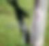Screen Shot 2020-04-15 at 2.44.20 PM.png