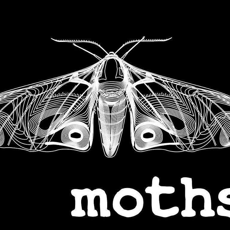 The Moths