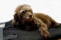 Bubbles - KP dog