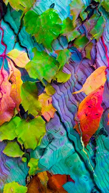 Rainbow Fall Garden