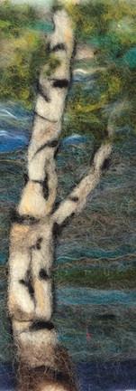 Cape Chin Birch