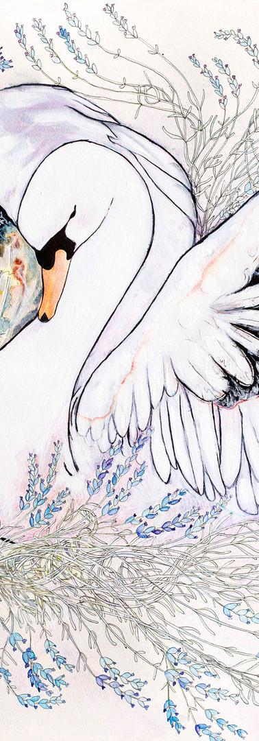 Lavender Swan