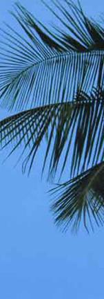 St-Lucia-memory high res-.jpg