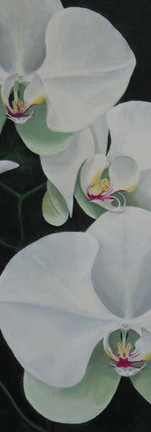 white-orchid-high res.jpg