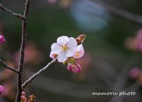 遅い春 Late spring.