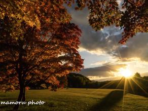 色とりどりの秋 Colorful autumn.