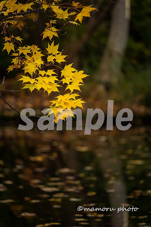 Postcard 2019 Autumn D