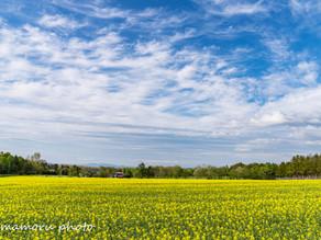 春の北海道 Hokkaido in spring.