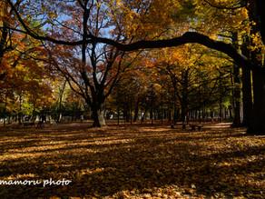晴れた秋 Sunny autumn.
