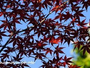 秋の大通公園 Odori Park in autumn.