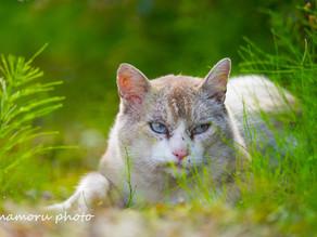 野良猫 Stray cat.