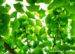 新緑の候 Fresh green season.