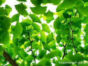 新緑の候 Fresh green season.