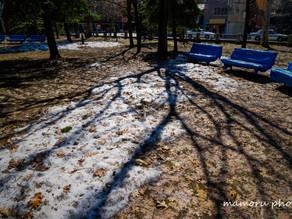 春の大通公園 Odori Park in spring.