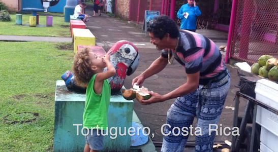 Makai eating coconut in Tortuguero, Costa Rica