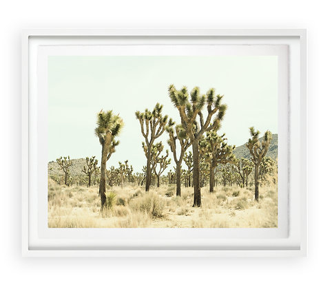 Christine Flynn | Joshua Tree