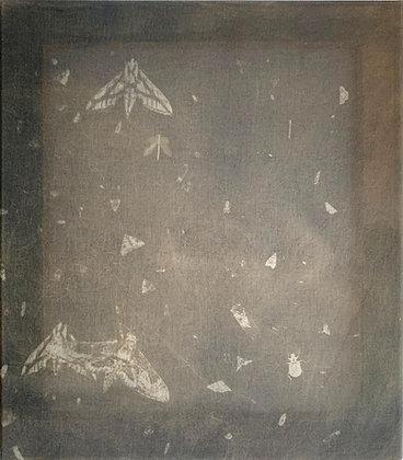 Ash Ferlito | Sphinx Months, Burdet, TX 9_21_19