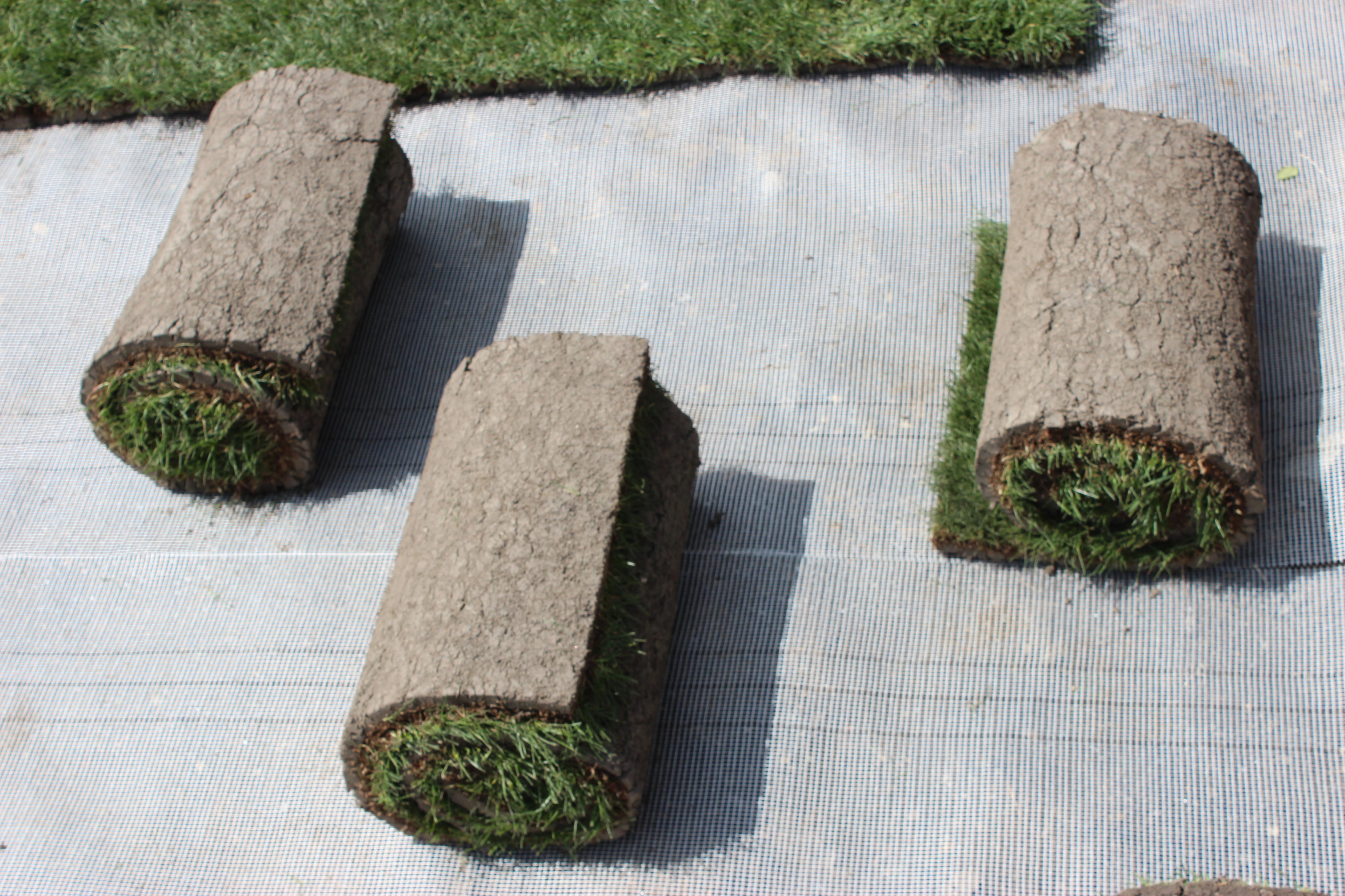 trávnikový koberec