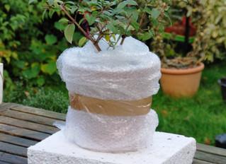 Doprajte rastlinám v zime polystyrén, ocenia to! Viete ochrániť rastliny pred extrémnym mrazom?
