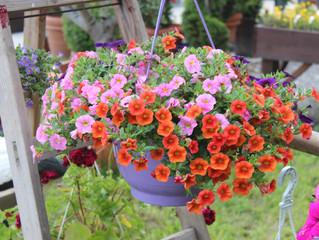 Jún v znamení pestrofarebných kvitnúcich závesov.
