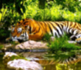 nature tours wildlife tours  school picnic educational tours india and school tours india educational trips india school trips india theteachcompany