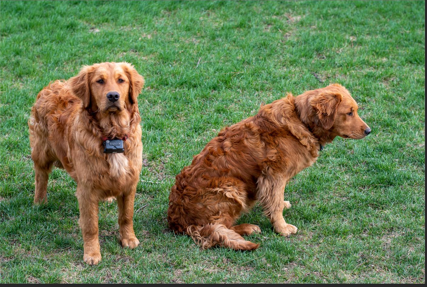 Boston (Left) and Breyer (Right)