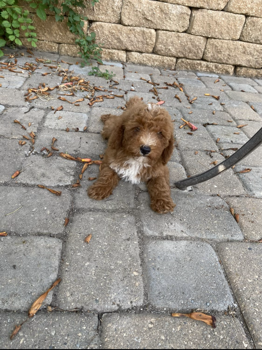 Meet Charlie!