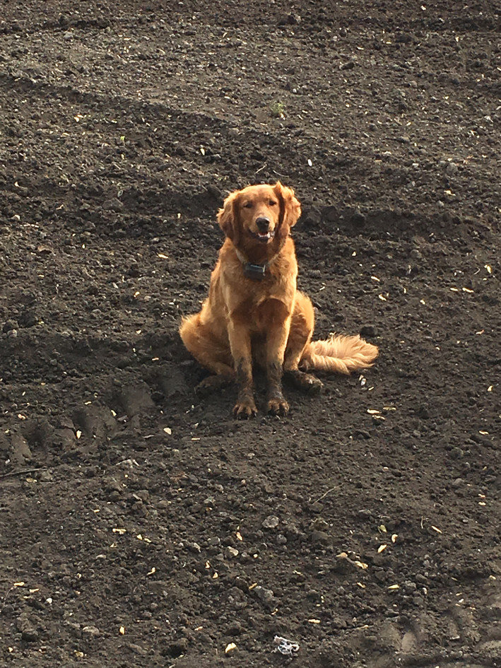"""Stella taking a break from """"helping"""" dig"""