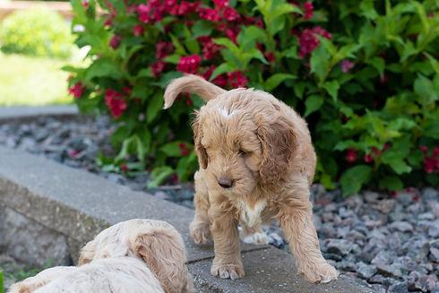 June Pups-07.jpg
