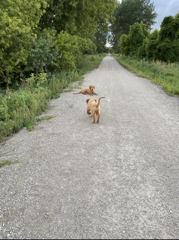 Portland and Shae enjoying a walk
