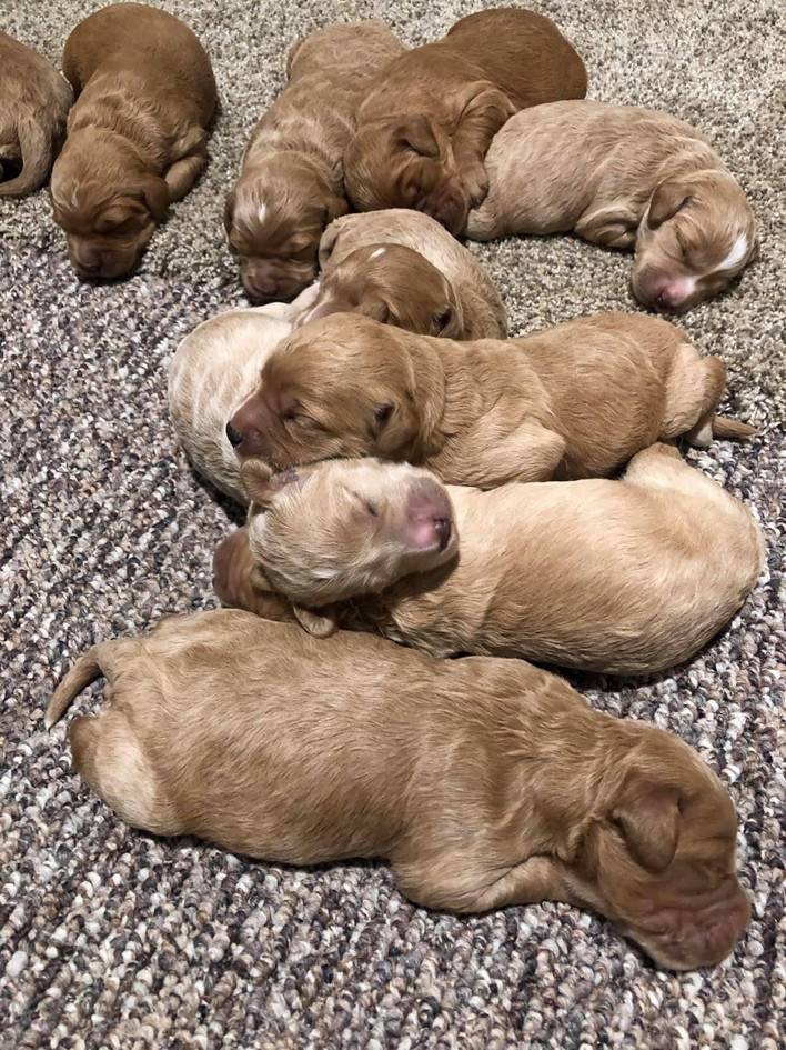 Marge's 1 week old pups