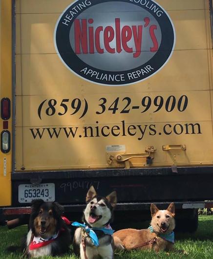 Niceleys Dogs.jpg